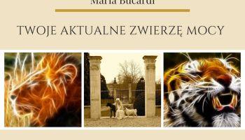 Maria Bucardi Twoje aktualne Zwierzę Mocy przepowiednia, ustalenie Twojego aktualnego Zwierzęcia Mocy, siły wewnętrznej, siły opiekuńczej, uzdrawiającej
