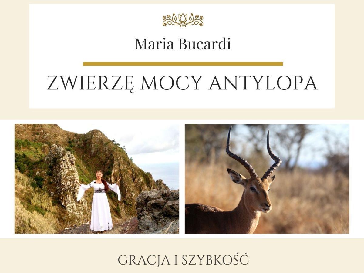 Maria Bucardi Zwierzę Mocy znaczenie Antylopa