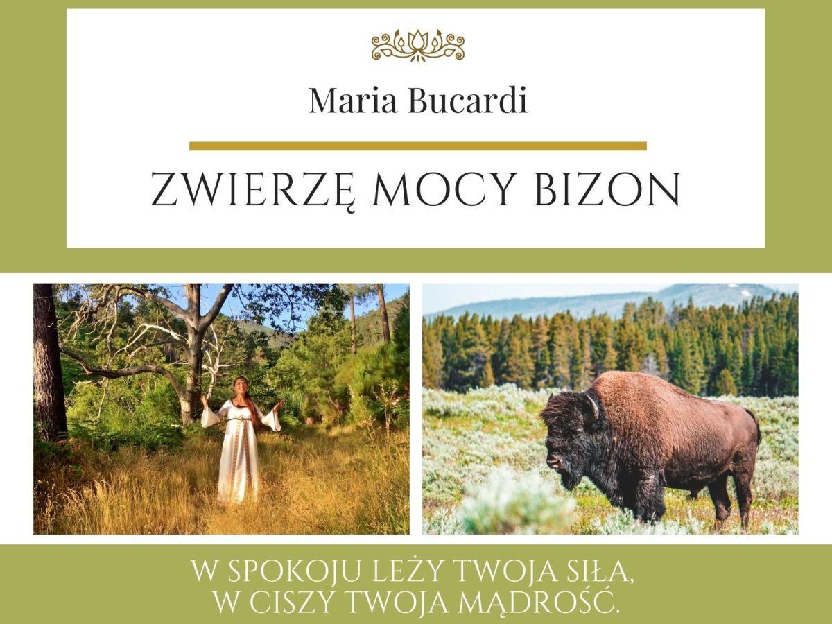 Maria Bucardi Zwierzę Mocy znaczenie Bizon
