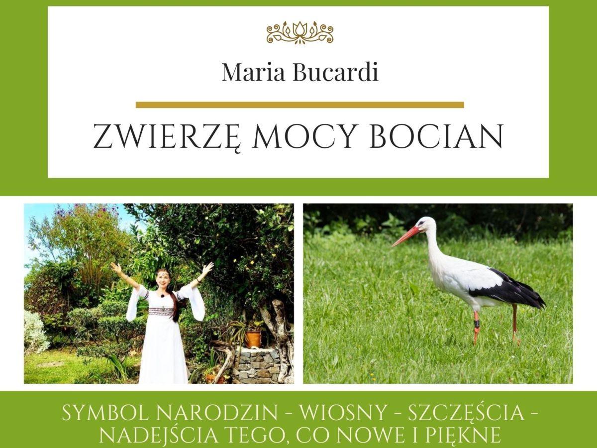 Maria Bucardi Zwierzę Mocy znaczenie Bocian