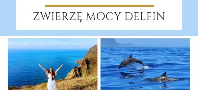Maria Bucardi Zwierzę Mocy znaczenie Delfin