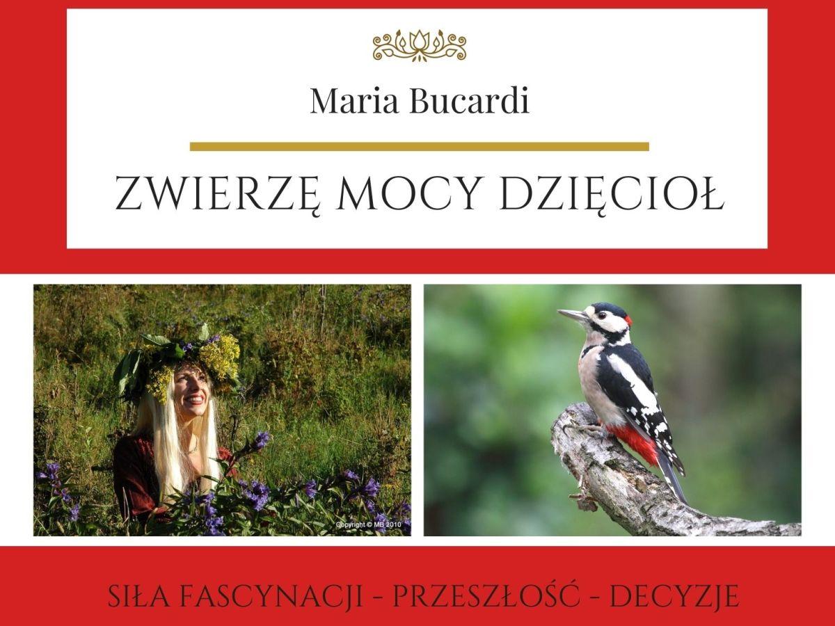 Maria Bucardi Zwierzę Mocy znaczenie Dzięcioł