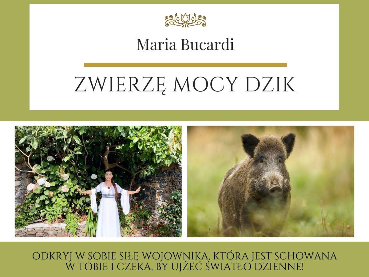Maria Bucardi Zwierzę Mocy znaczenie Dzik