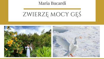 Maria Bucardi Zwierzę Mocy znaczenie Gęś