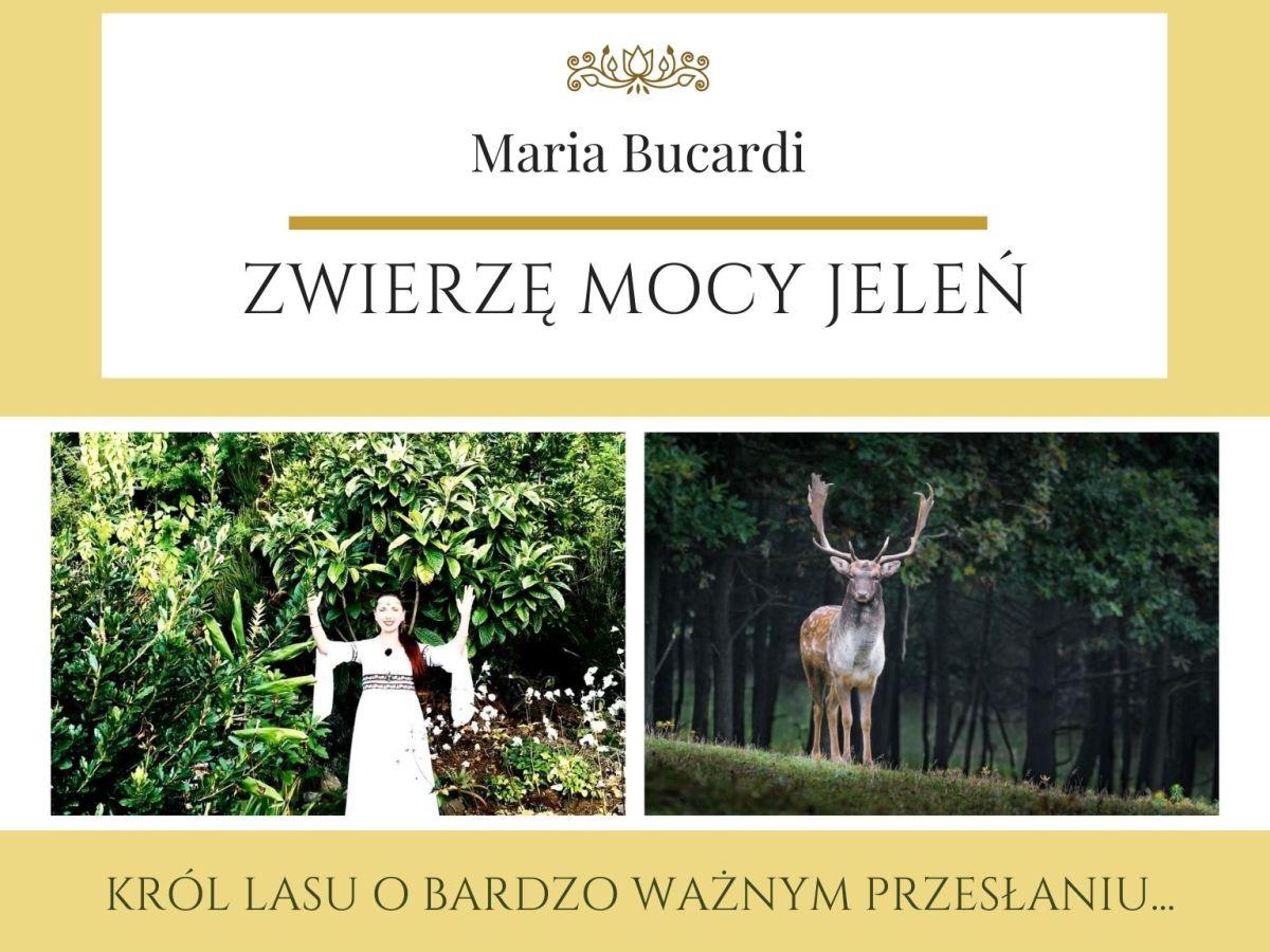 Maria Bucardi Zwierzę Mocy znaczenie Jeleń