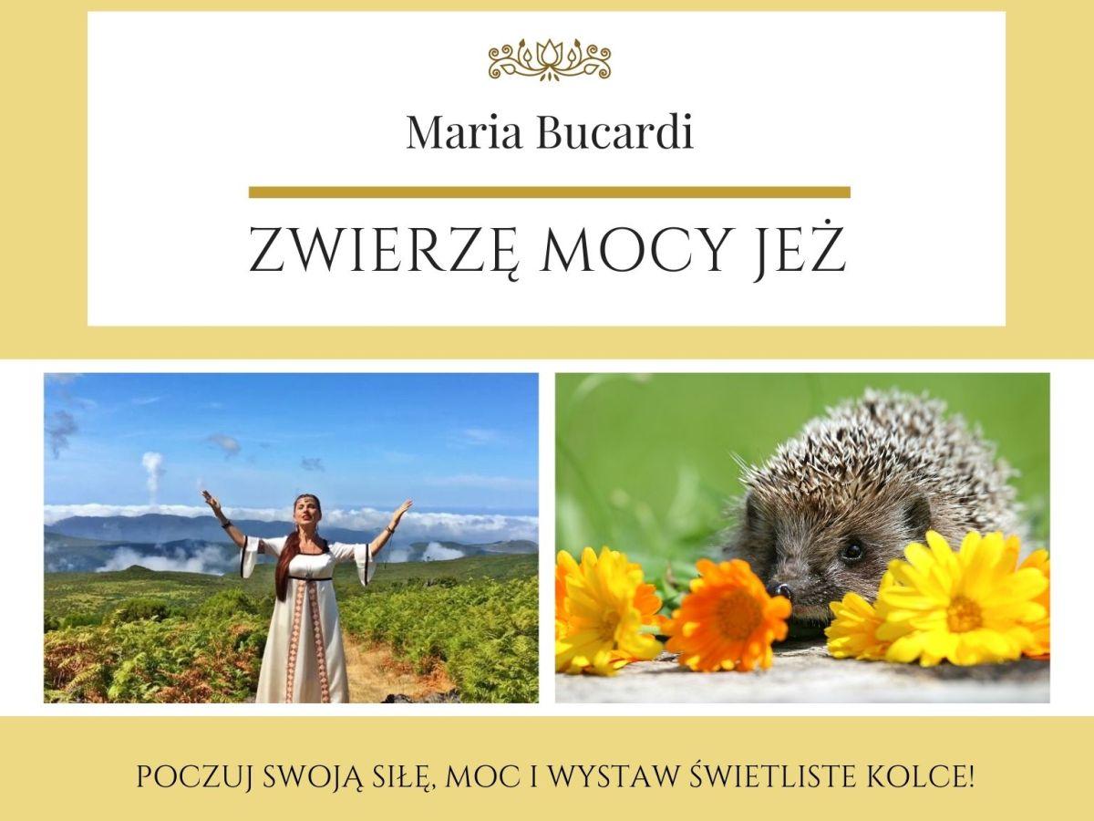 Maria Bucardi Zwierzę Mocy znaczenie Jeż