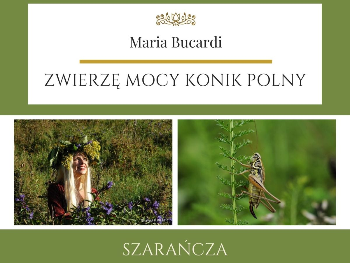 Maria Bucardi Zwierzę Mocy znaczenie Konik Polny, szarańcza