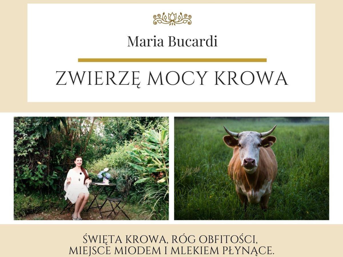 Maria Bucardi Zwierzę Mocy znaczenie Krowa