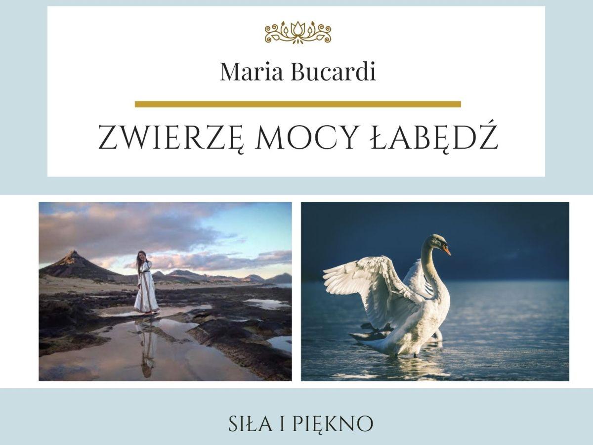 Maria Bucardi Zwierzę Mocy znaczenie Łabędź