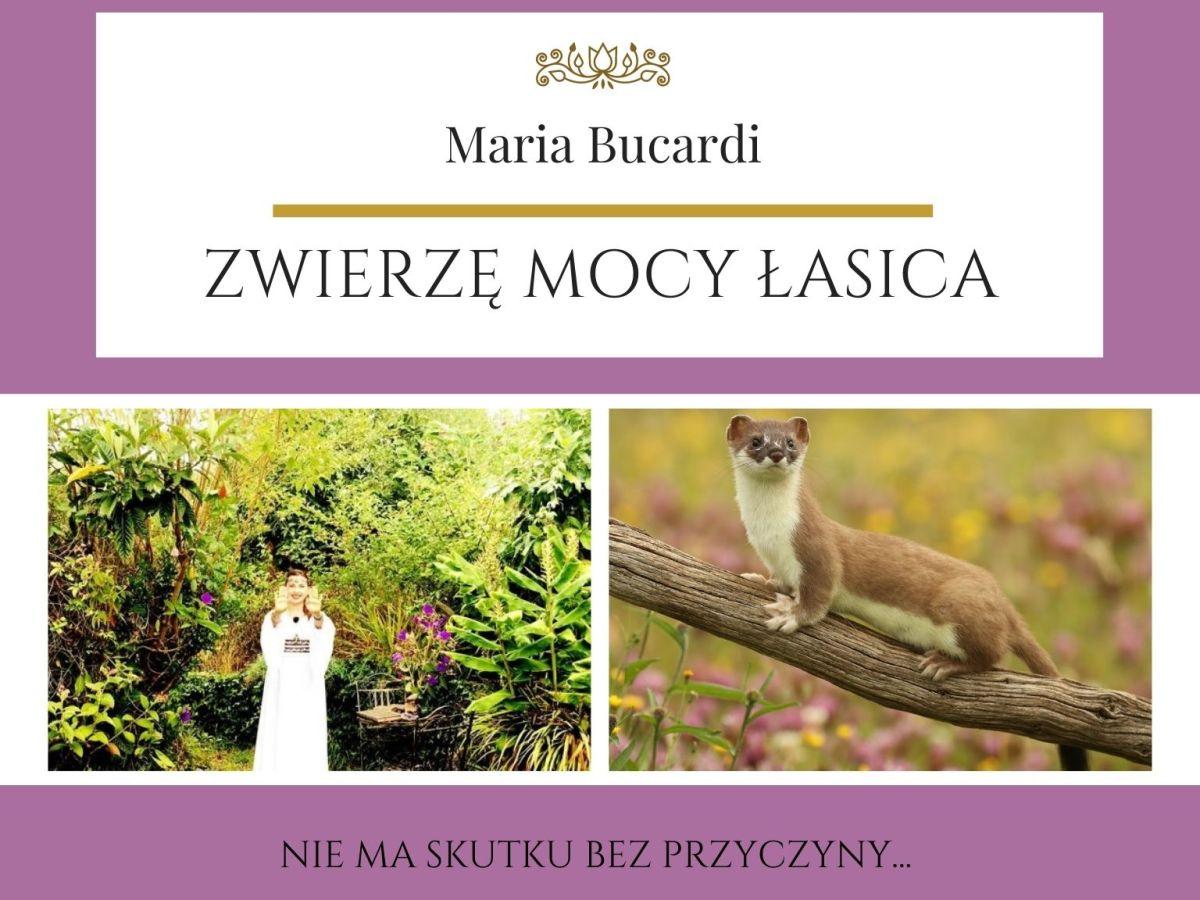 Maria Bucardi Zwierzę Mocy znaczenie Łasica