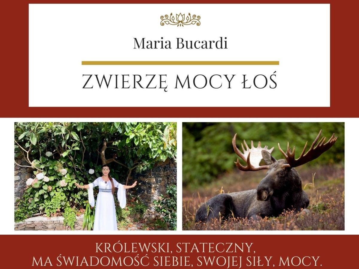 Maria Bucardi Zwierzę Mocy znaczenie Łoś
