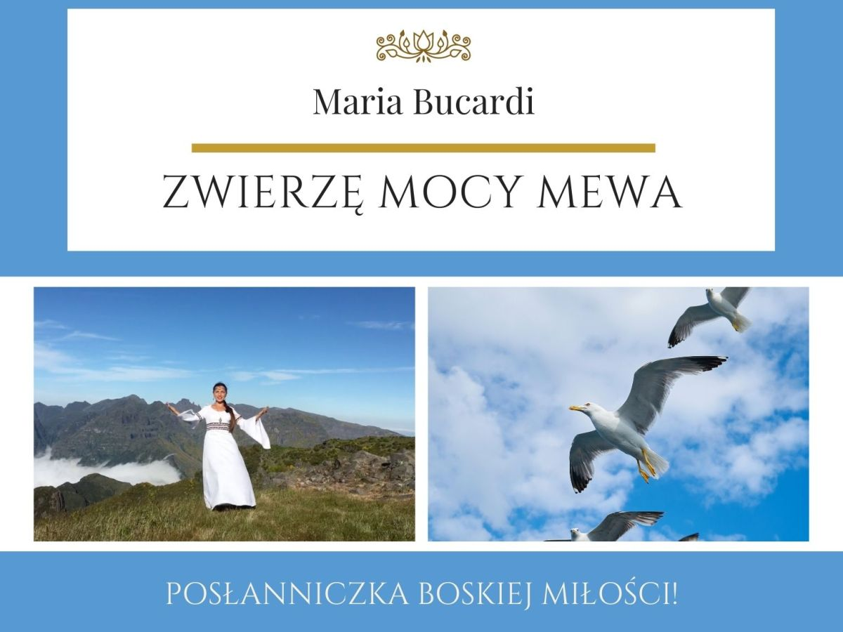 Maria Bucardi Zwierzę Mocy znaczenie Mewa