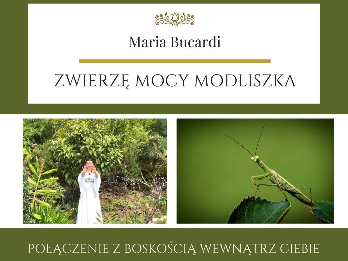 Maria Bucardi Zwierzę Mocy znaczenie Modliszka