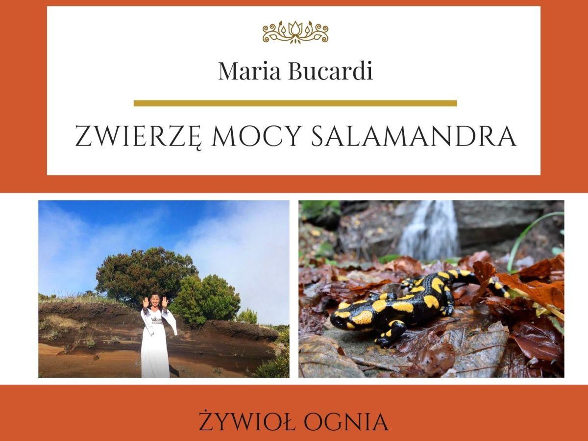 Maria Bucardi Zwierzę Mocy znaczenie Salamandra