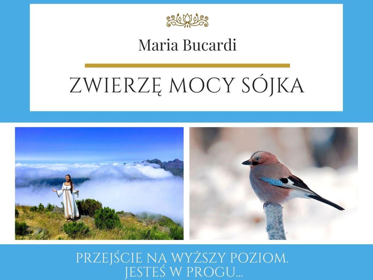 Maria Bucardi Zwierzę Mocy znaczenie Sójka