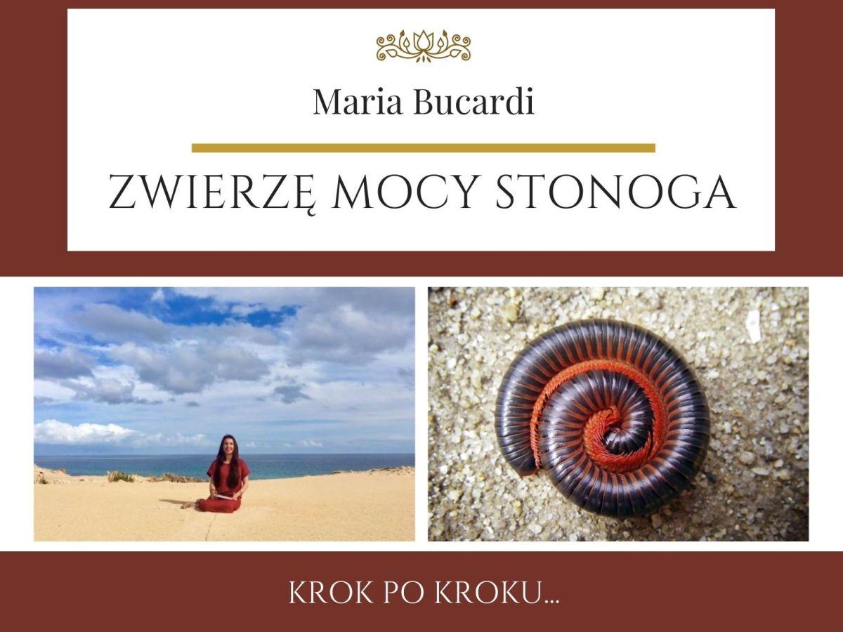 Maria Bucardi Zwierzę Mocy znaczenie Stonoga