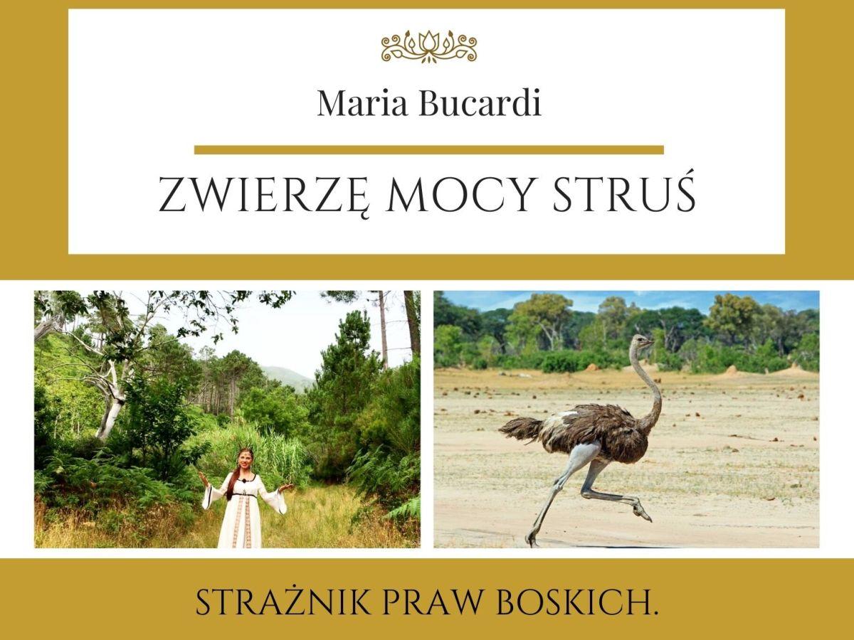 Maria Bucardi Zwierzę Mocy znaczenie Struś