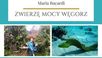 Maria Bucardi Zwierzę Mocy znaczenie Węgorz