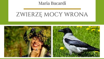 Maria Bucardi Zwierzę Mocy znaczenie Wrona