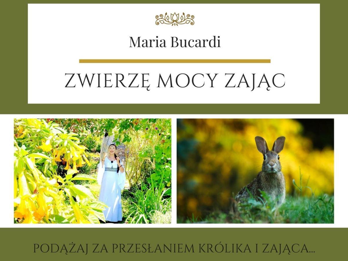 Maria Bucardi Zwierzę Mocy znaczenie Zając, Królik