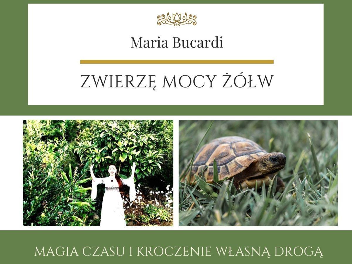 Maria Bucardi Zwierzę Mocy znaczenie Żółw
