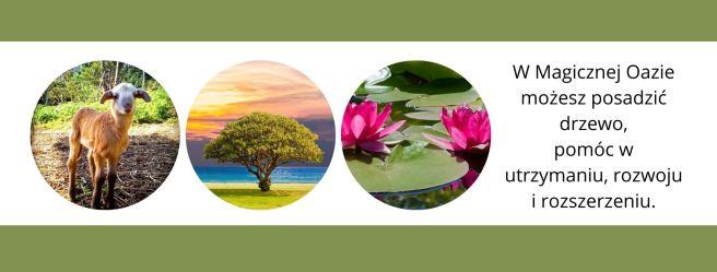 W Magicznej Oazie możesz posadzić drzewo, pomóc w utrzymaniu, rozwoju i rozszerzeniu.