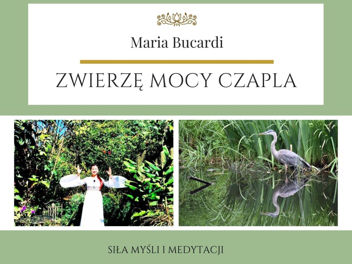 Zwierzę Mocy wg Marii Bucardi znaczenie Czapla