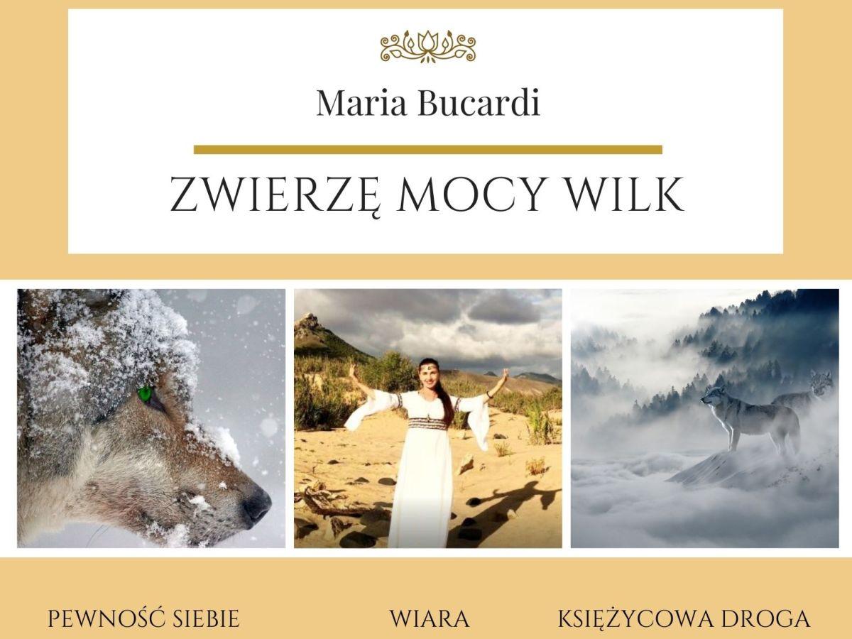 Zwierzę Mocy wg Marii Bucardi znaczenie Wilk