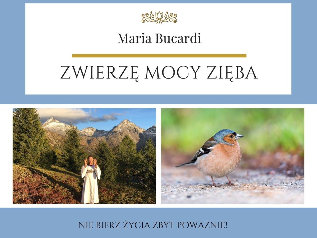 Zwierzę Mocy wg Marii Bucardi znaczenie Zięba Zwyczajna
