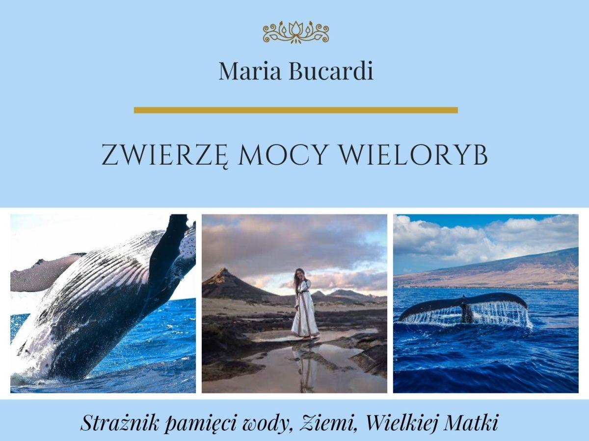 Zwierzę Mocy Wieloryb znaczenie wg Marii Bucardi