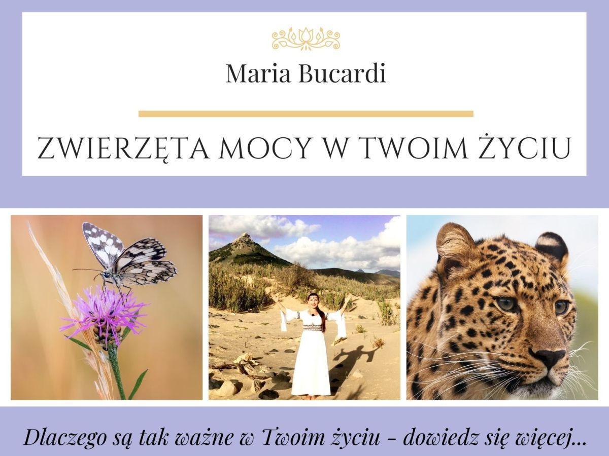 Zwierzę Mocy znaczenie Maria Bucardi - Zwierzęta Mocy dlaczego są ważne w życiu