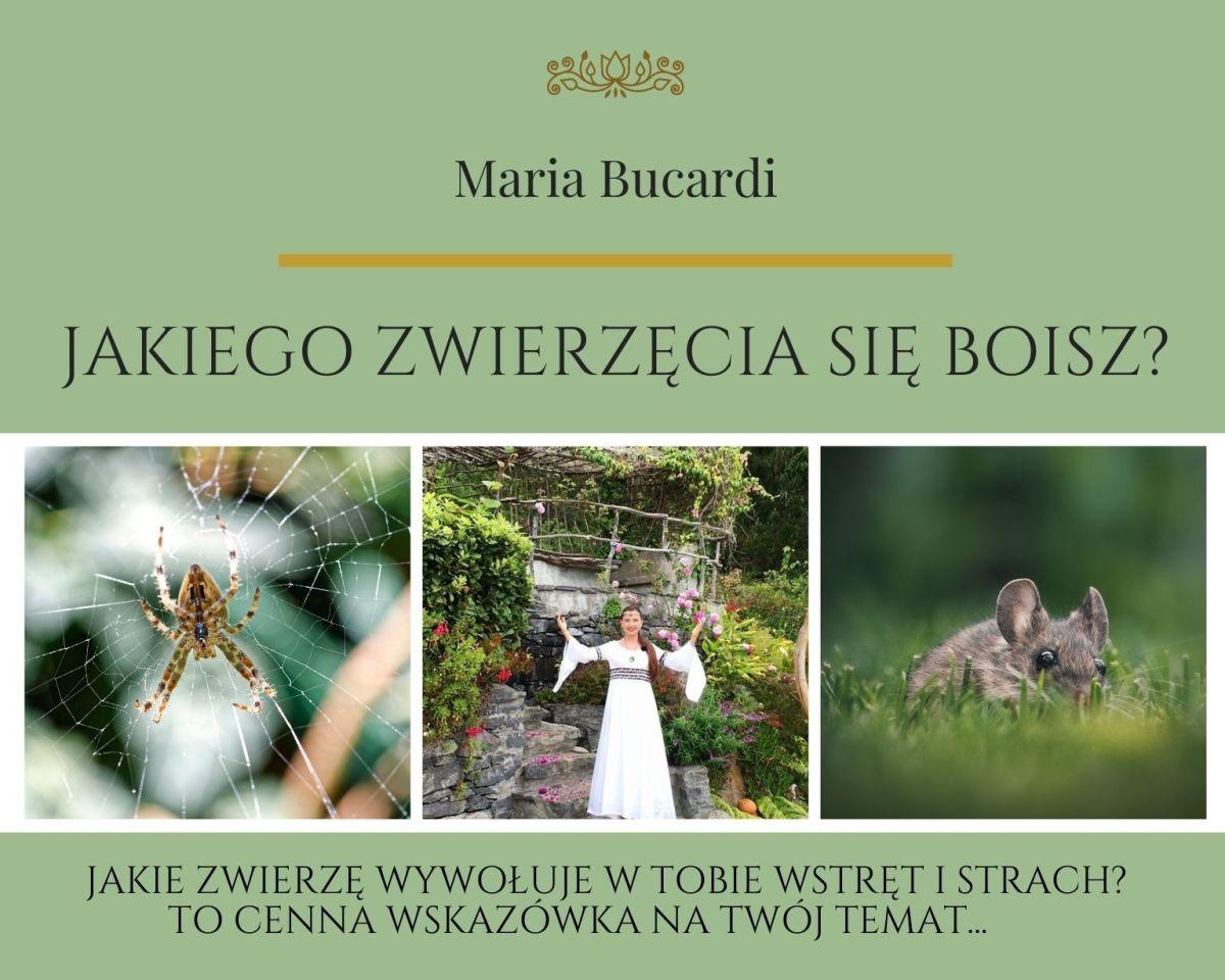 Zwierzę Mocy znaczenie wg Maria Bucardi. Jakiego zwierzęcia sie boisz, jakie zwierzę wywołuje w Tobie wstręt i strach - to wskazówka na Twoj temat