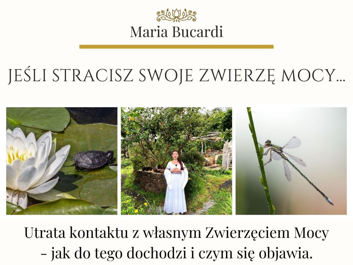 Zwierzę Mocy znaczenie wg Marii Bucardi - jeśli straciesz swoje Zwierzę Mocy, jak do tego dochodzi i czym się objawia