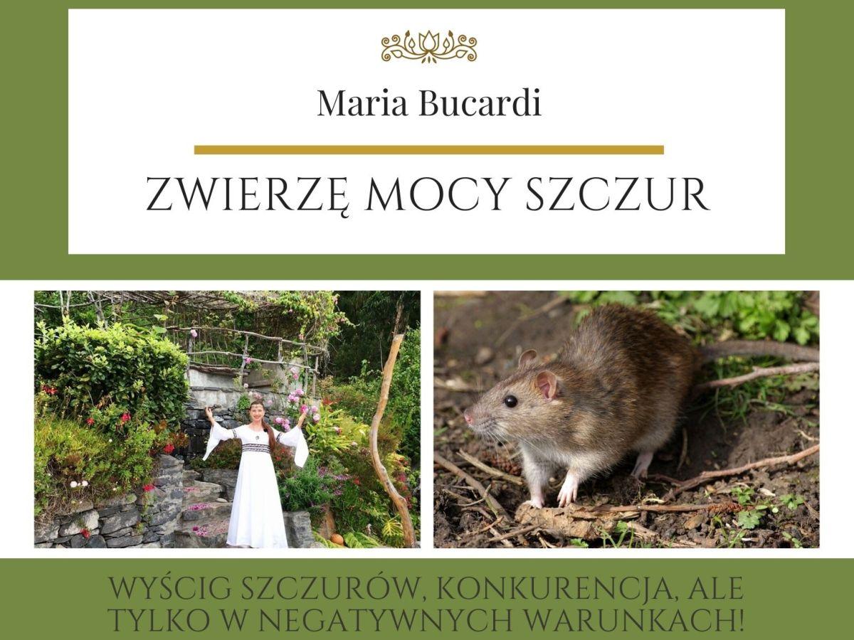 Zwierzę Mocy znaczenie wg Marii Bucardi Szczur