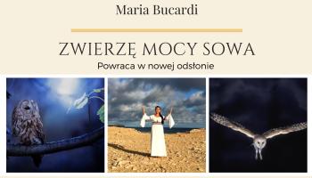 Zwierzę Mocy Sowa znaczenie wg Maria Bucardi, nowa odsłona i jeszcze więcej informacji, totem