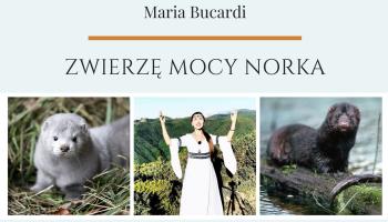 Zwierzę Mocy Norka, znaczenie wg Maria Bucardi