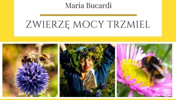 Zwierzę Mocy Trzmiel znaczenie wg Maria Bucardi
