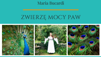 Zwierzę Mocy znaczenie wg Maria Bucardi