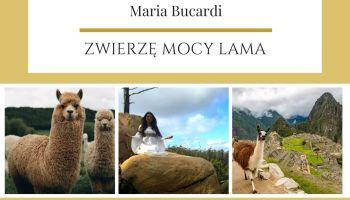 Lama Zwierze Mocy Maria Bucardi