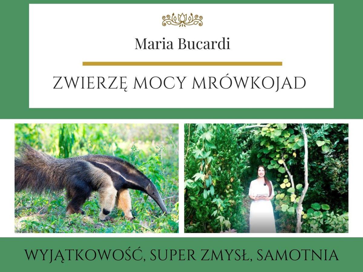 Mrówkojad Zwierze Mocy Maria Bucardi