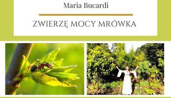 Mrowka Zwierze Mocy znaczenie Maria Bucardi