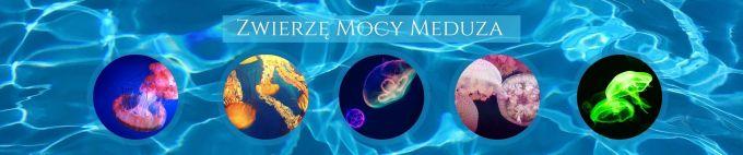 Zwierzę Mocy Meduza znaczenie Maria Bucardi