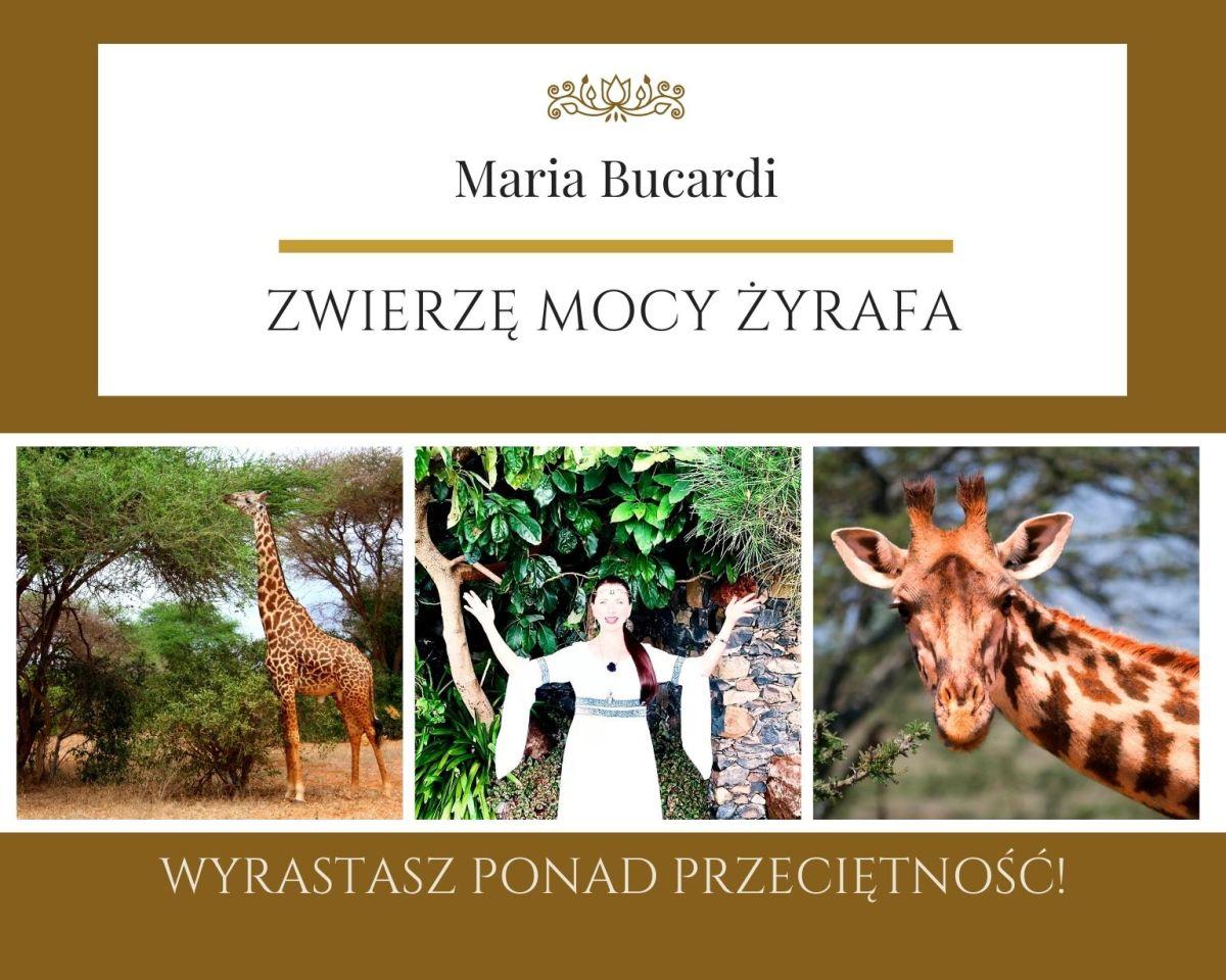 Żyrafa Zwierzę Mocy Maria Bucardi