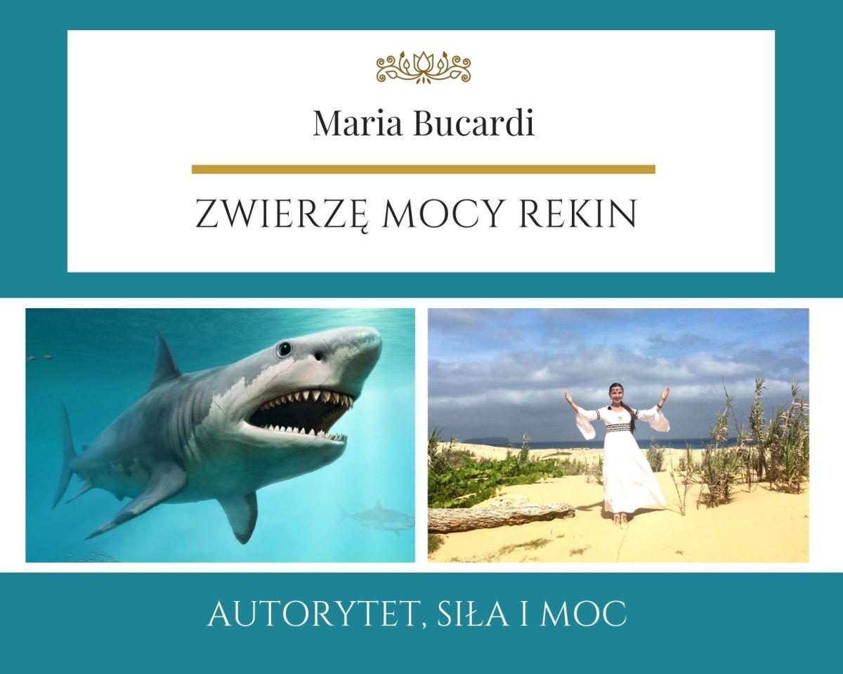 Rekin Zwierze Mocy Maria Bucardi