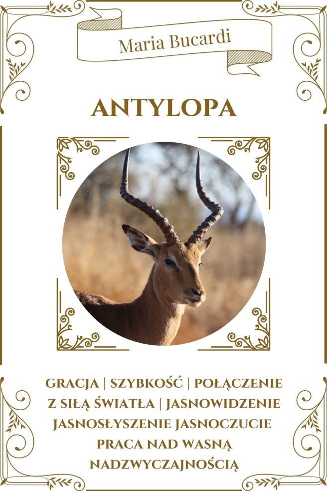 Antylopa Zwierzę Mocy Karty Marii Bucardi