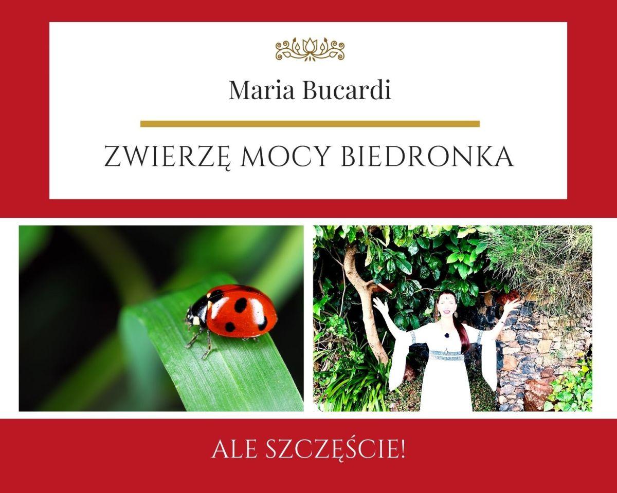 Zwierzę Mocy biedronka znaczenie, Maria Bucardi