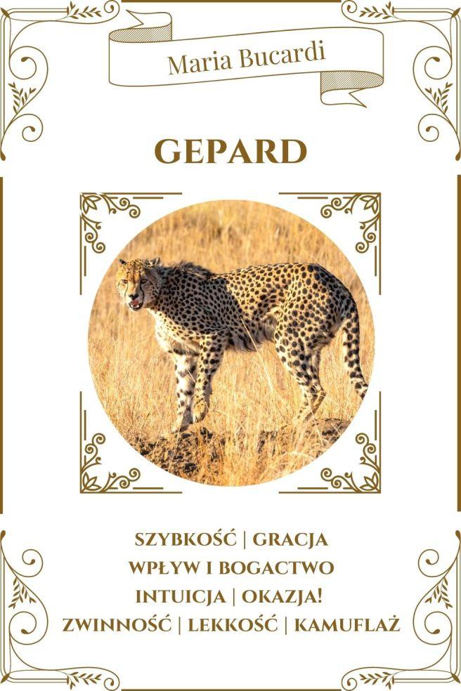 Gepard Karta Zwierzę Mocy I Maria Bucardi