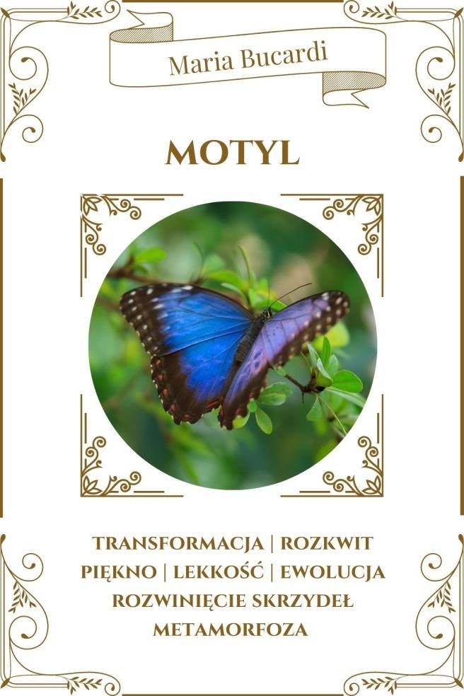 Motyl Zwierzę Mocy Karty Marii Bucardi