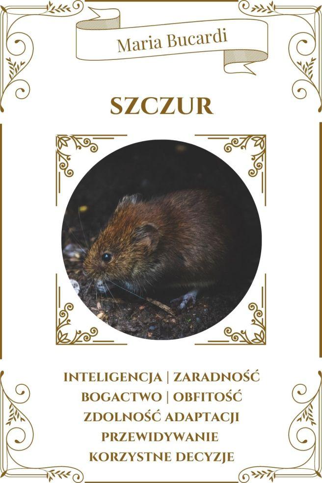 Szczur Zwierzę Mocy Karty Marii Bucardi